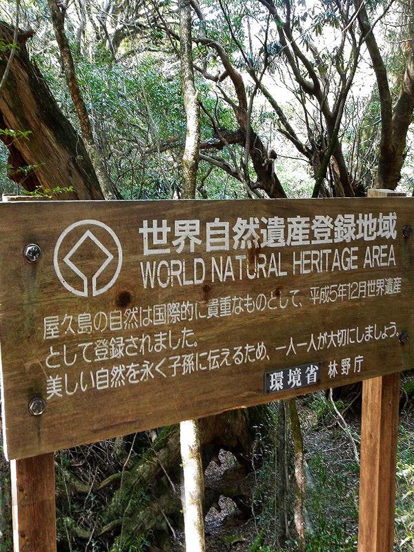 自然 遺産 世界